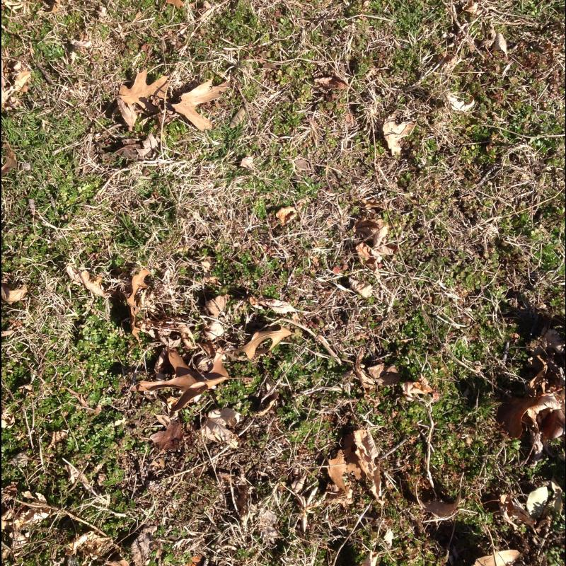 Miscellaneous Lawn image from Frisco