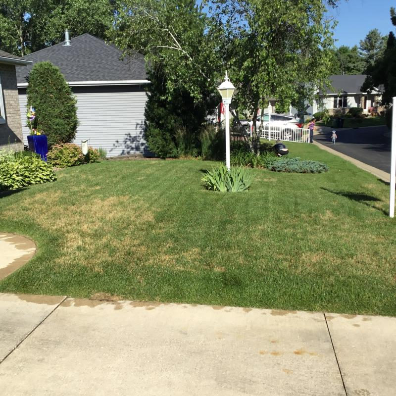 Lawn Care & Weed Control Rochester, MN | Spring-Green