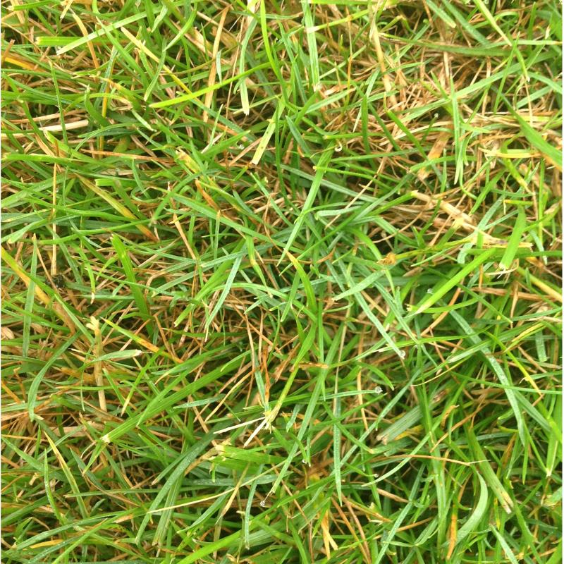 Lawn Diseases image from Montgomery