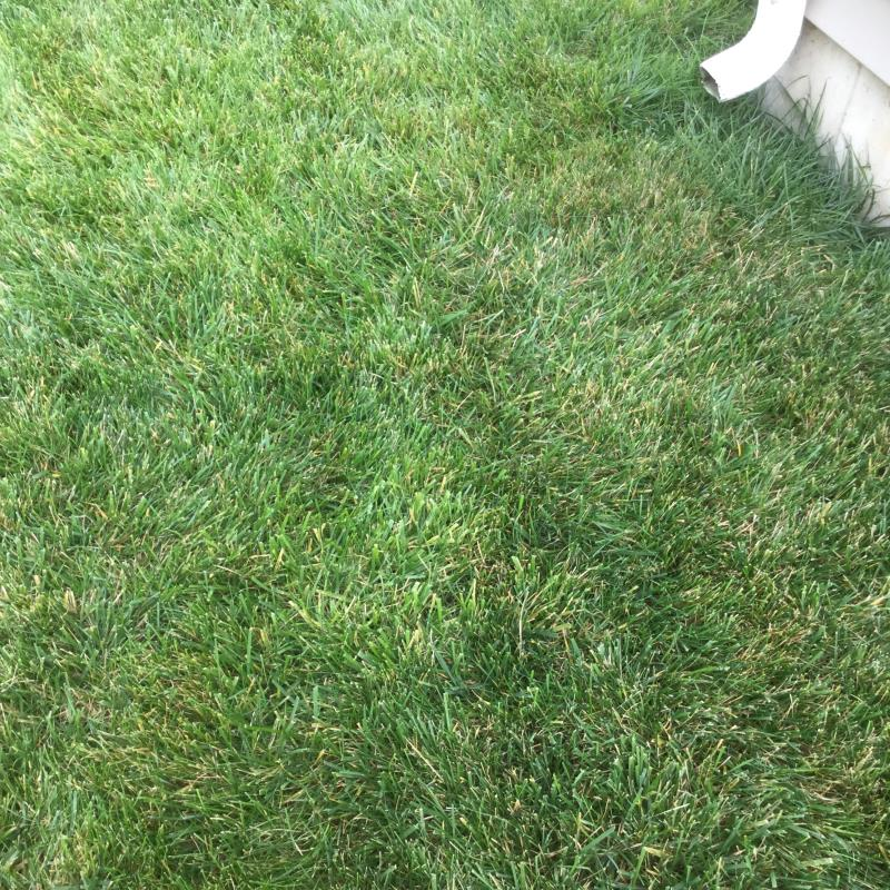 Lawn Diseases image from O Fallon
