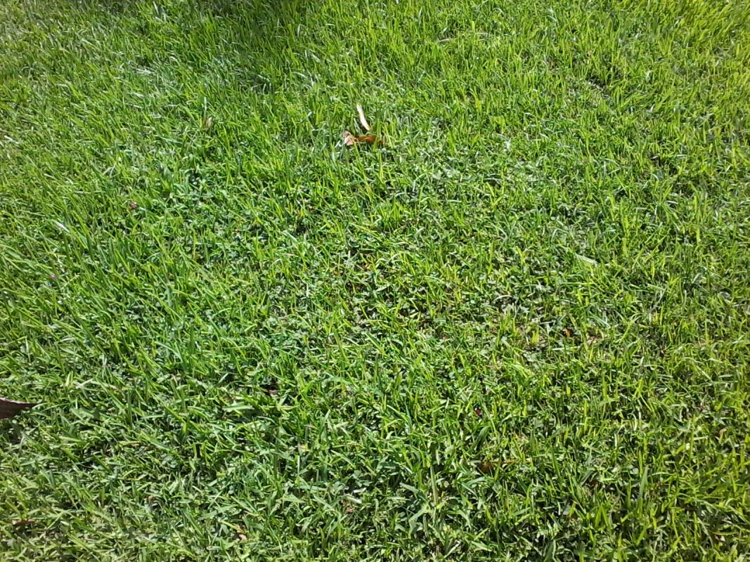 Broadleaf Weeds Diff image from Baton Rouge