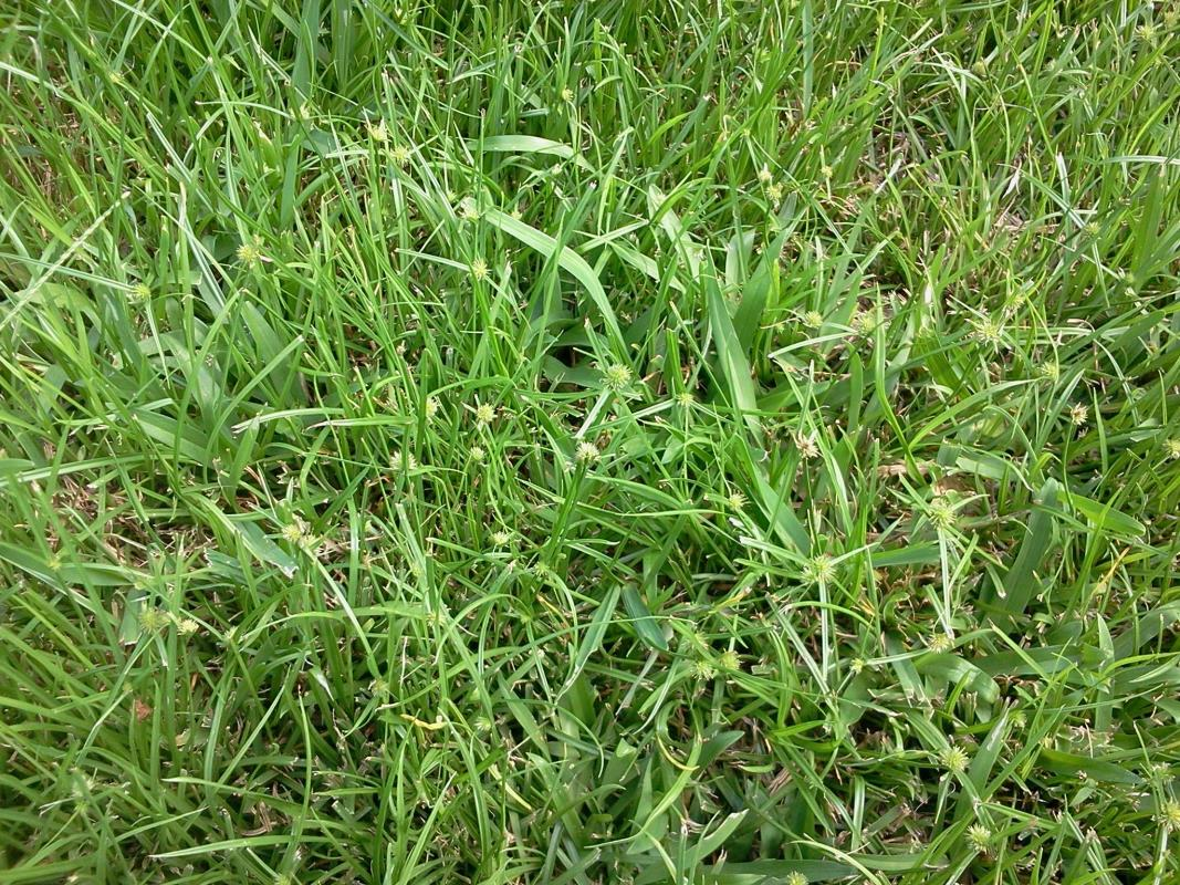 Grassy Weeds image from USA