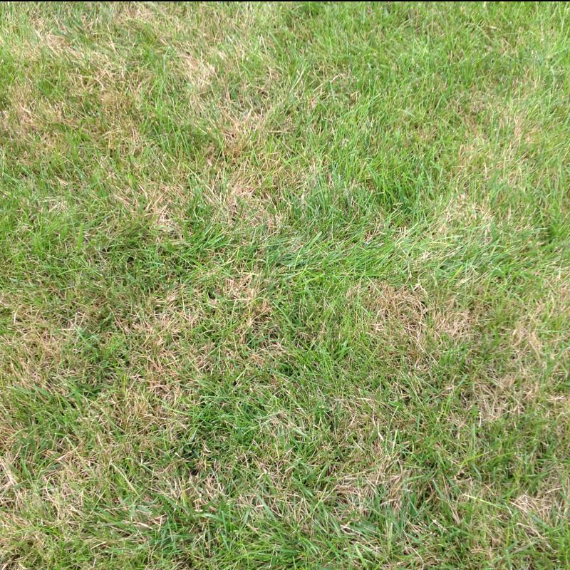 Lawn Diseases image from USA