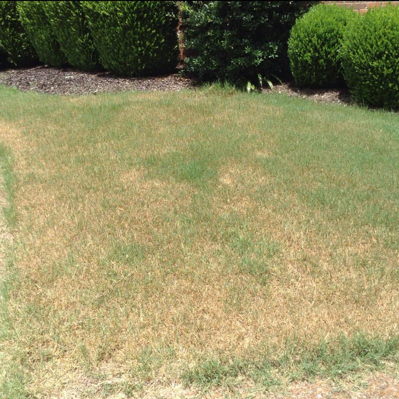 Lawn Diseases image from Franklin