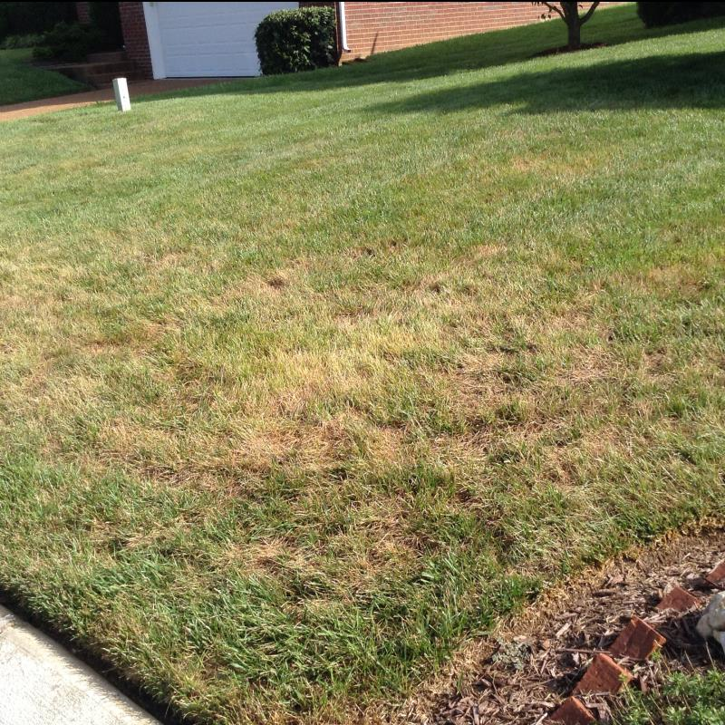 Lawn Diseases image from Thompsons Station