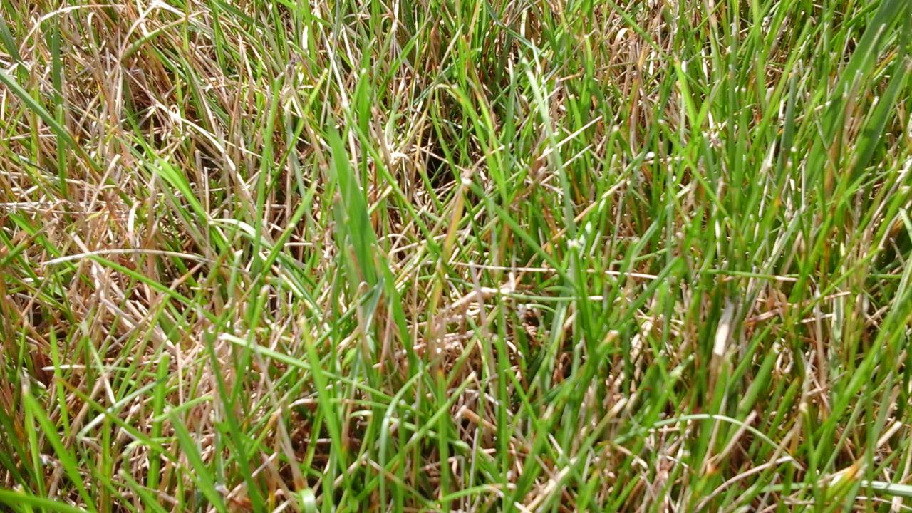 Lawn Diseases image from Mequon