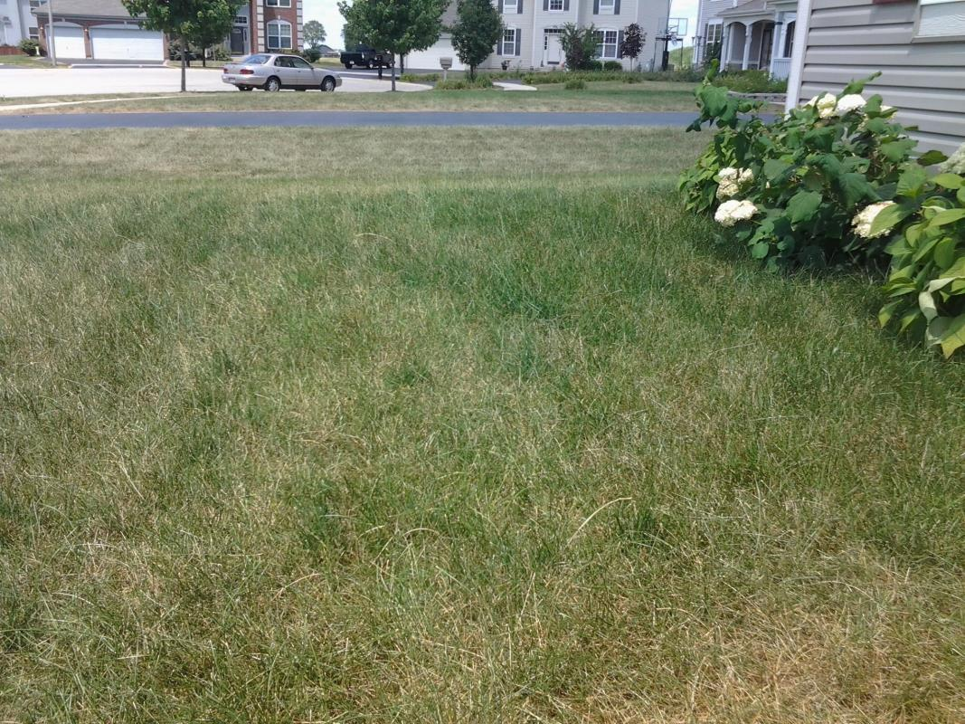 Lawn Mowing image from Oswego
