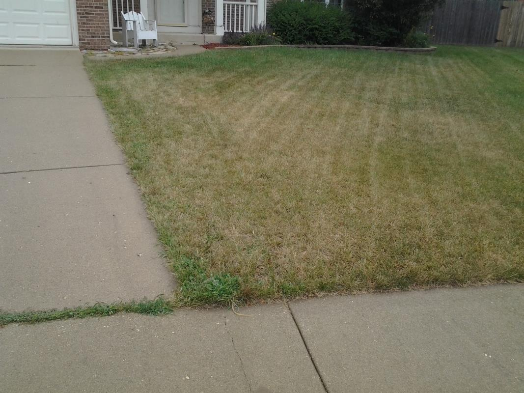 Grass Needed Watering image from Oswego