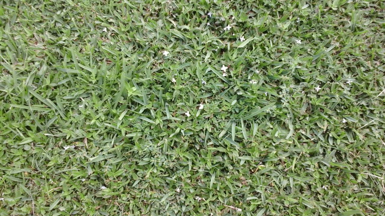 Grassy Weeds image from Baker