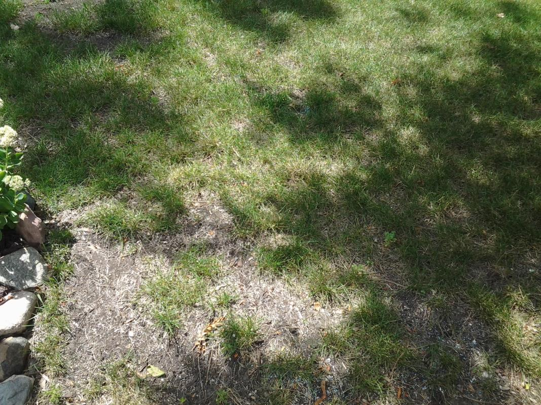 Grass Needed Watering image from Aurora